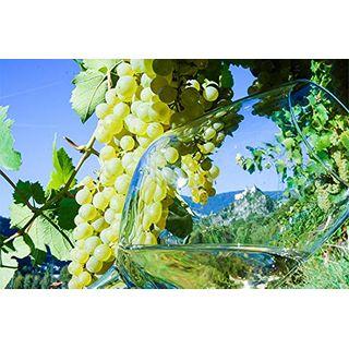 Jochen Schweizer Geschenkgutschein: Weinkenner-Kurzurlaub in Südtirol