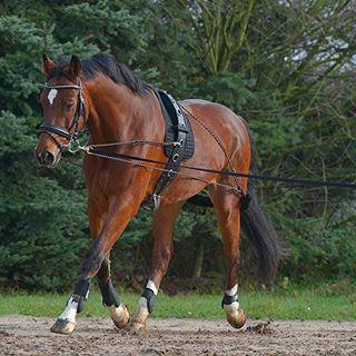 Waldhausen Longiersystem schwarz Pony