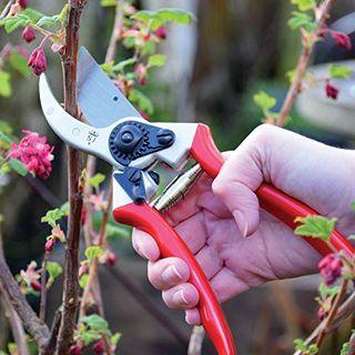 Spear & Jackson Razorsharp Hochleistungs-Bypass-Gartenschere