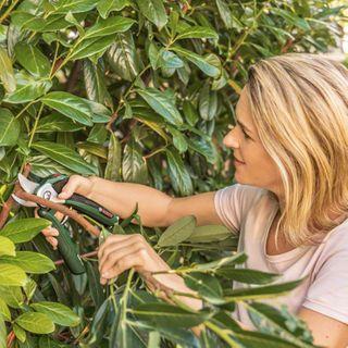 Bosch Elektro Gartenschere EasyPrune